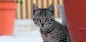 Animales: fotografía de cachorro gato asustado